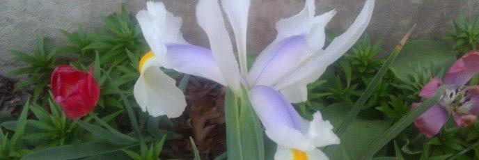 Iris - 2012 91/366