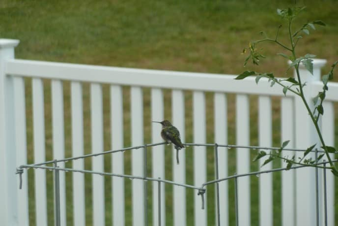 Hummingbird - 2012 211/366