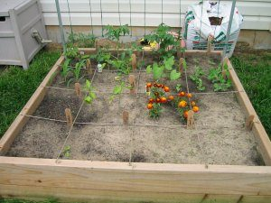 Garden on May 11, 2003