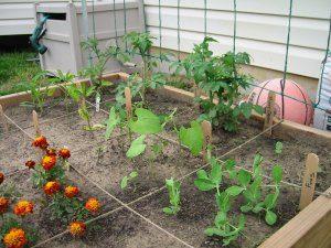 Garden on May 11, 2003 - Closeup